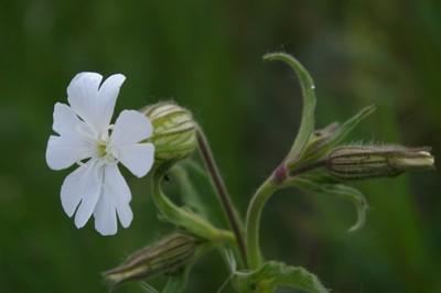 Sejour et stage nature en provence sejour plantes - Cuisiner les herbes sauvages ...