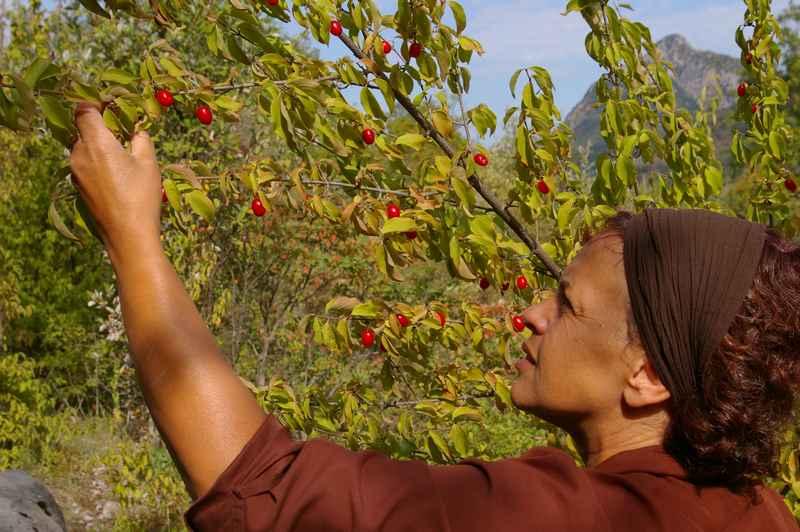 cuisiner les plantes sauvages comestibles